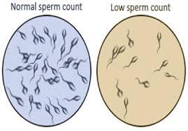 Oligospermia/Low Sperm Count | Ayurveda|Herbal Medicine